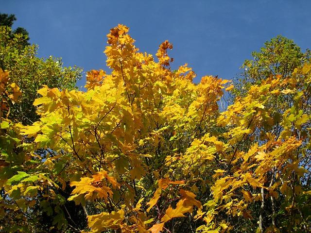 Free autumn sky blue tree colors yellow orange green