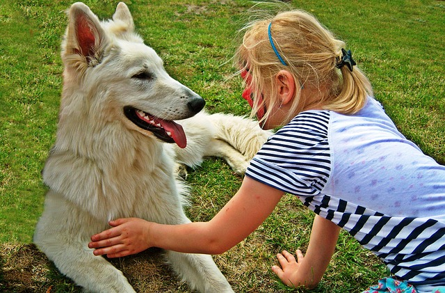 Free pets dogs dog schäfer dog friendship friends