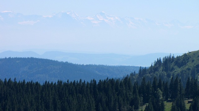 Free black forest feldberg alpine firs alpenblick view