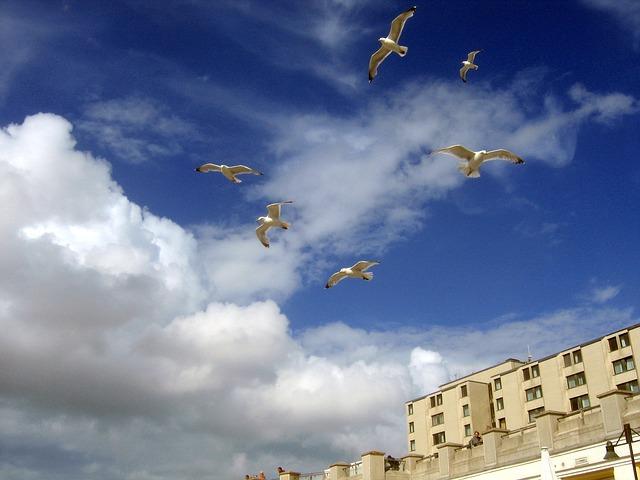 Free seagull gulls blue sky gull