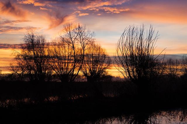 Free silhouette trees twilight back light sunrise skies