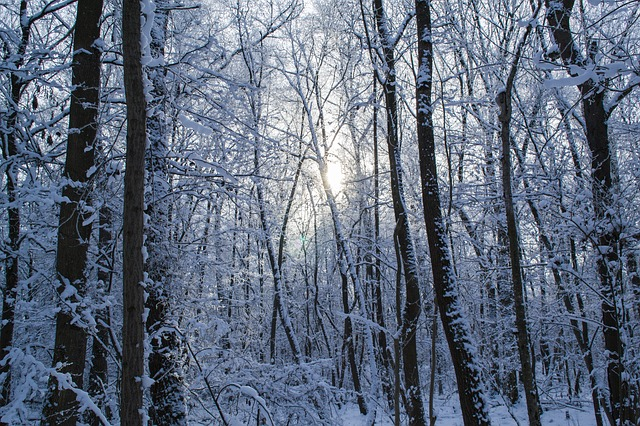 Free winter forest forest trees snow winter
