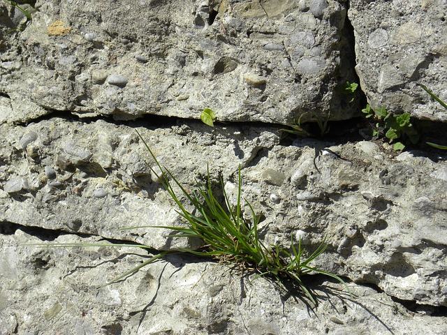 Free rock wall grass close-up natural wild grasses