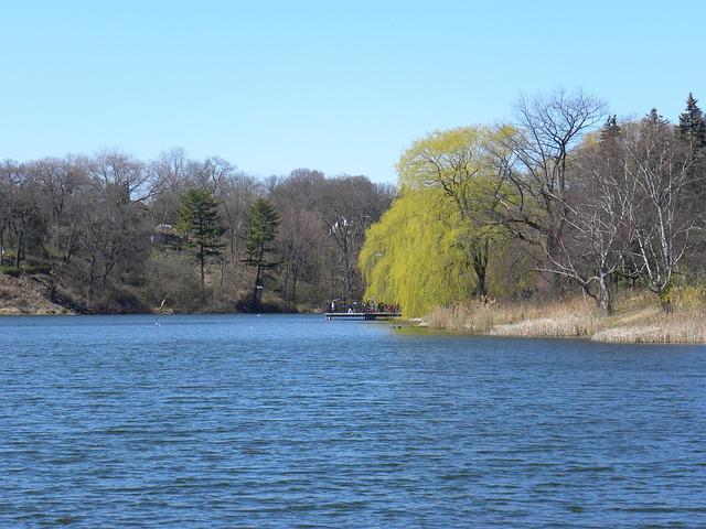 Free pond water trees park landscape