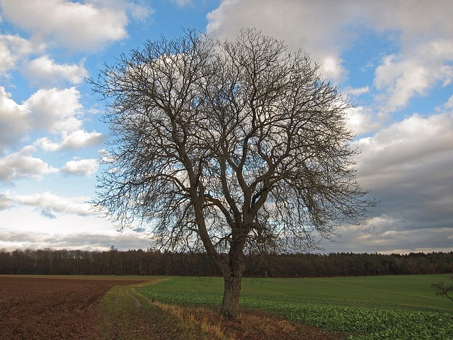 Free Photos: Germany landscape tree field isolated nature | David Mark