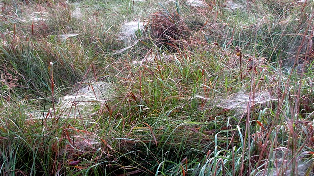 Free spin spider webs autumn autumn meadow dew