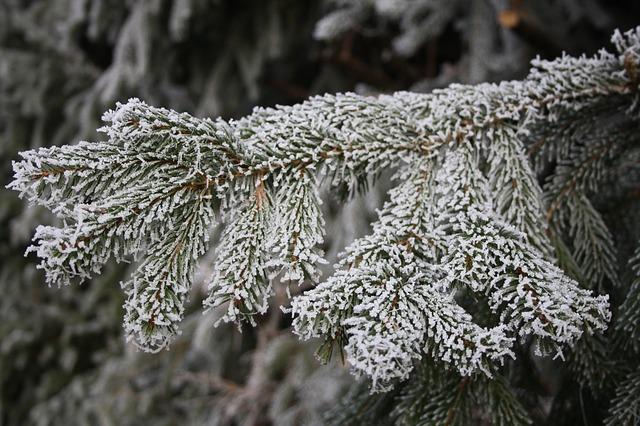 Free ripe winter hoarfrost tree aesthetic frozen