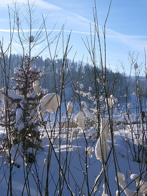 Free winter sun snow nature