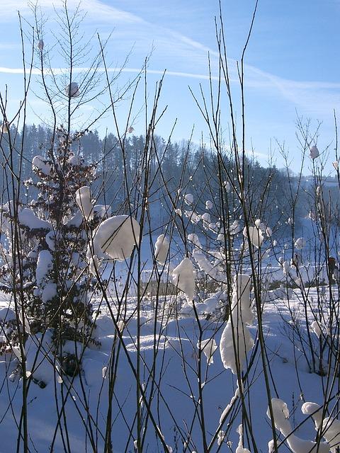 Free Photos: Winter sun snow nature | joduma