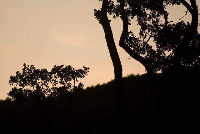 Free abendstimmung sunset water sky romance