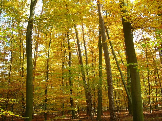 Free autumn forest emerge golden october yellow