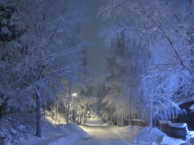 Free winter snow frost trees blue shade snow covered