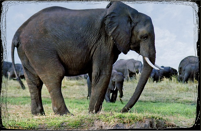 Free elephants animal namibia safari africa wild life