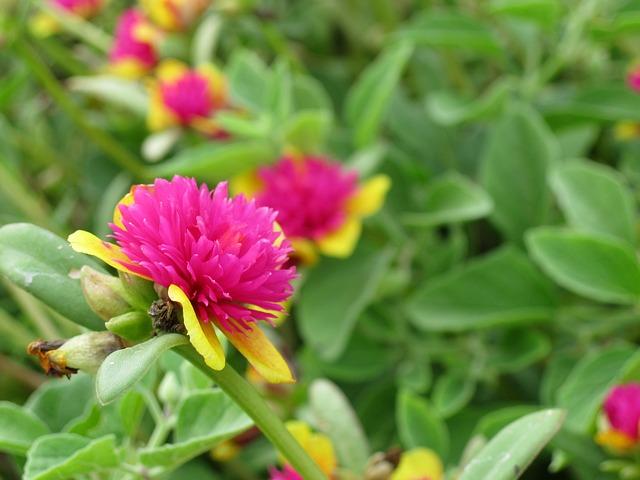 Free flower flowers purple summer green plants life