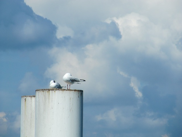 Free pigeons chimney lake constance clouds ferry