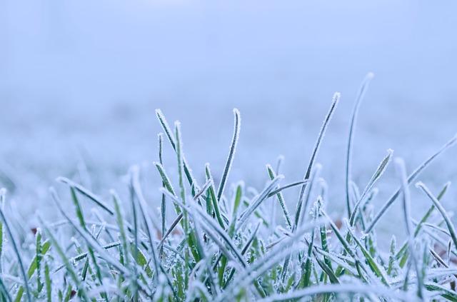 Free winter snow seasons nature macro frozen white