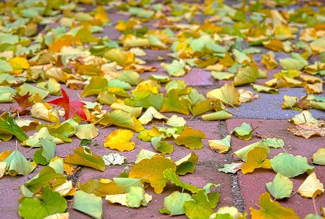 Free leaves leaf autumn fall turning leaves