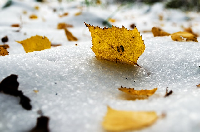 Free Photos: Snow yellow leaf seasons winter cold | PublicDomainPictures