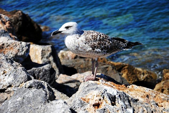 Free seagull rocks sea holidays bird holiday