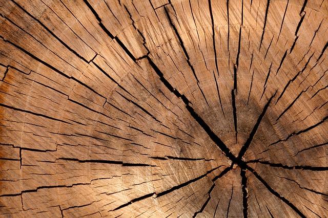 Free background brown circle cut detail log lumber
