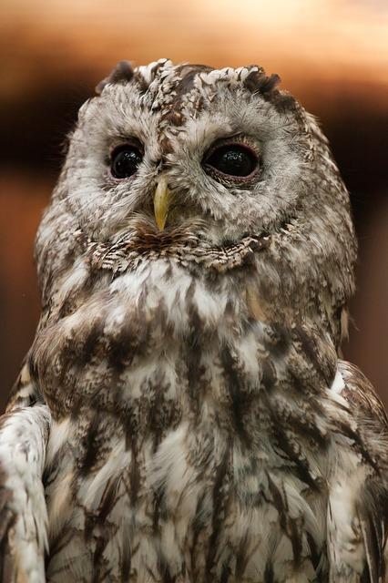 Free animal beak bird brown eyes feathers hunter