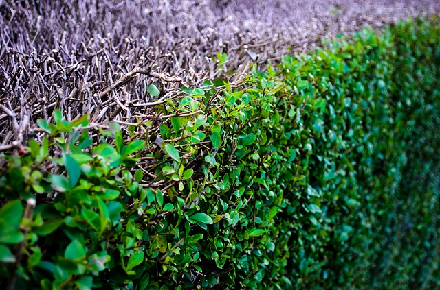 Free abstract background bush close ecological ecology