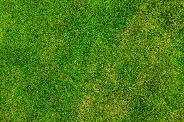 Free abstract backdrop background field football fresh