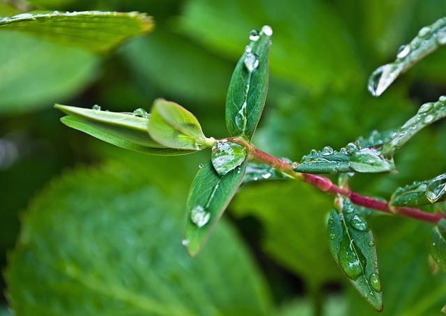 Free drop drops rain leaves water macro background