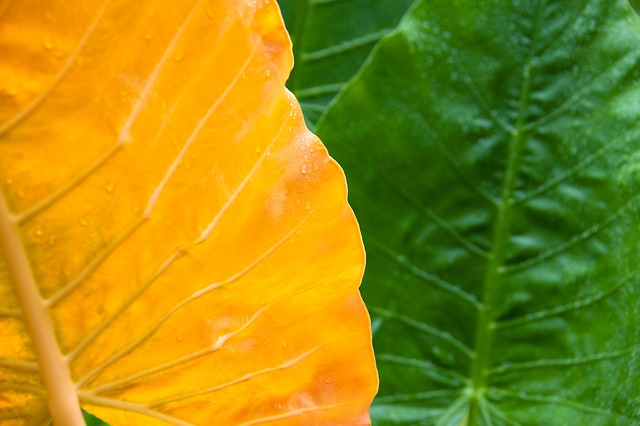 Free leaf green wet nature background yellow fresh