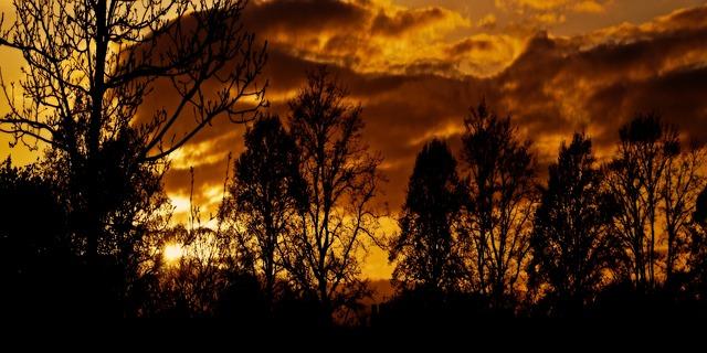 Free Photos: African sunset trees tree nature night seasons | PublicDomainPictures
