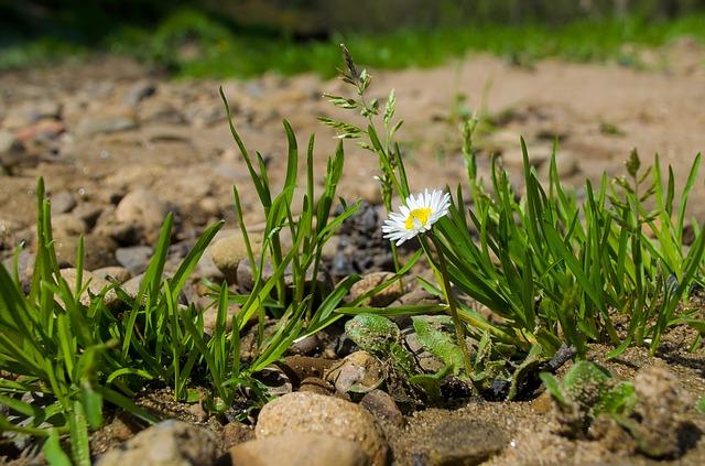 Free flower grass macro nature seasons spring summer