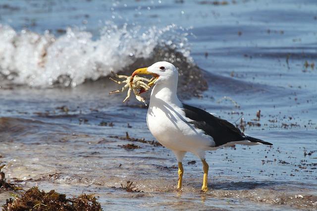 Free sea birds albatross crab food lunch beach water