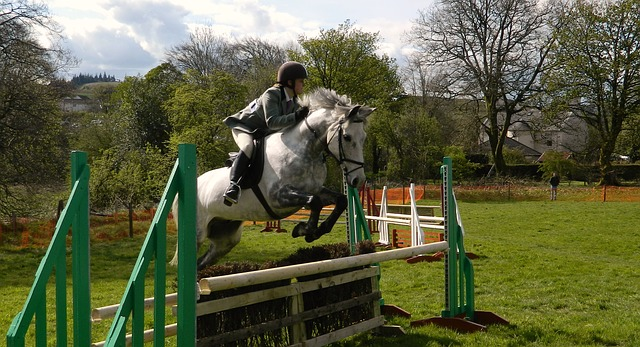 Free horse rider show jumping