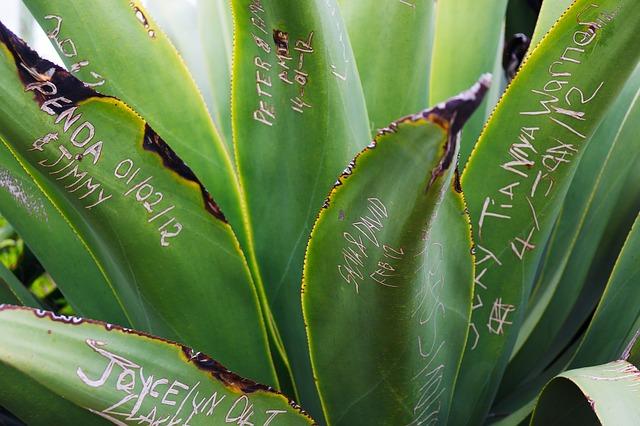 Free nature natural leaf name green plant symbol
