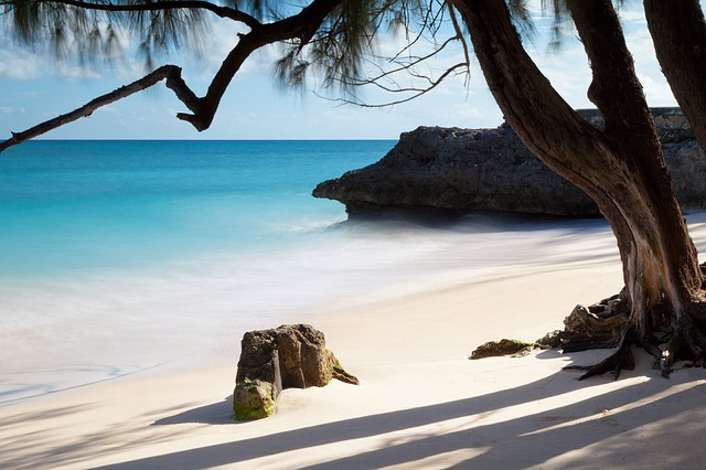 Free tropical sand ocean beach sea nature tree water