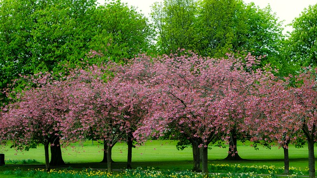 Free spring tree branch branches season nature green