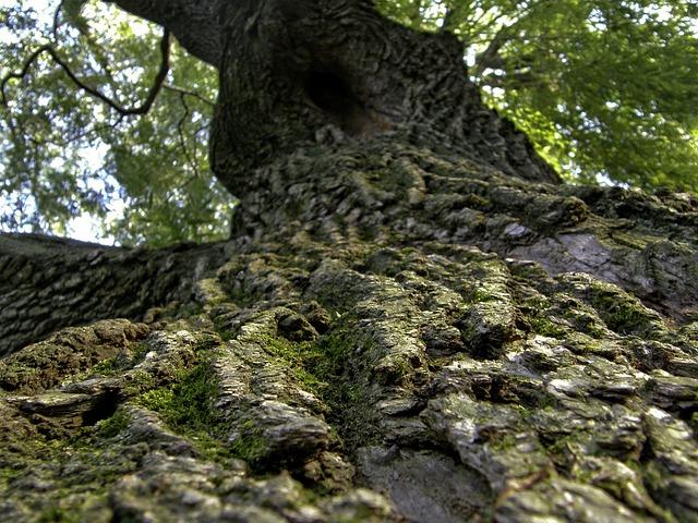 Free tree bark trunk