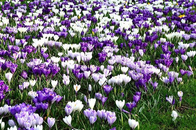 Free Photos: Flower flowers season spring nature decorations | PublicDomainPictures