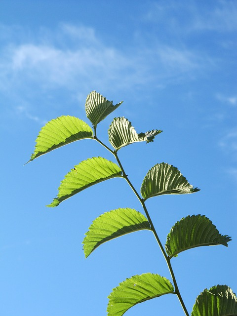 Free fplanze leaves green blue sky