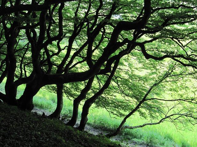 Free forest trees green tribe denmark rold skov