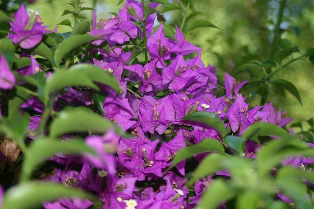 Free purple flower flowers