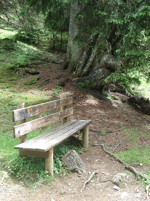 Free nature bank wooden bench rest peace