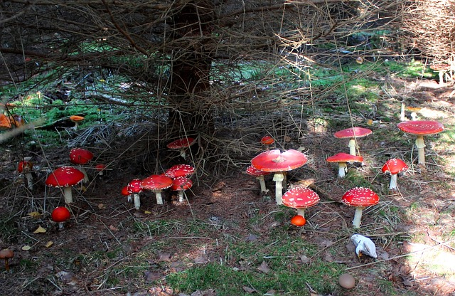 Free lucky guy luck fly agaric autumn nature good luck