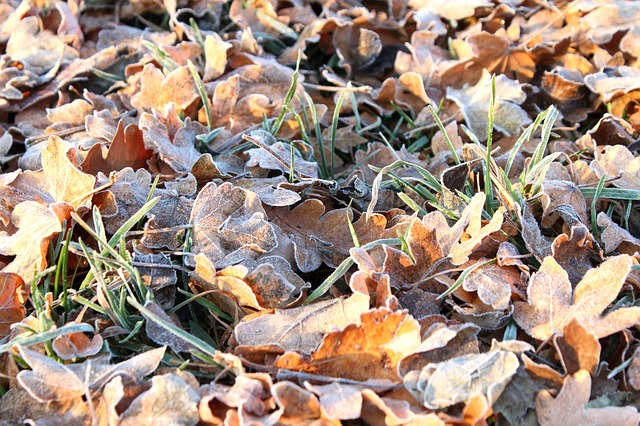 Free frost leaves autumn frozen cold winter on frozen