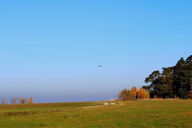 Free bird adler freedom landscape sky meadow