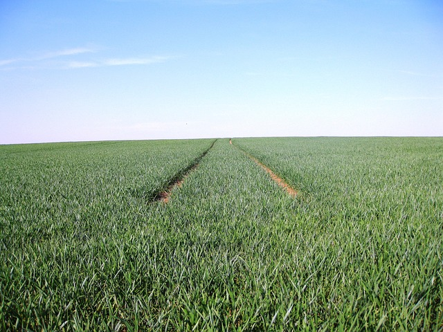 Free monoculture away sky field fields agriculture
