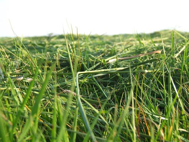 Free grass meadow mowed close green