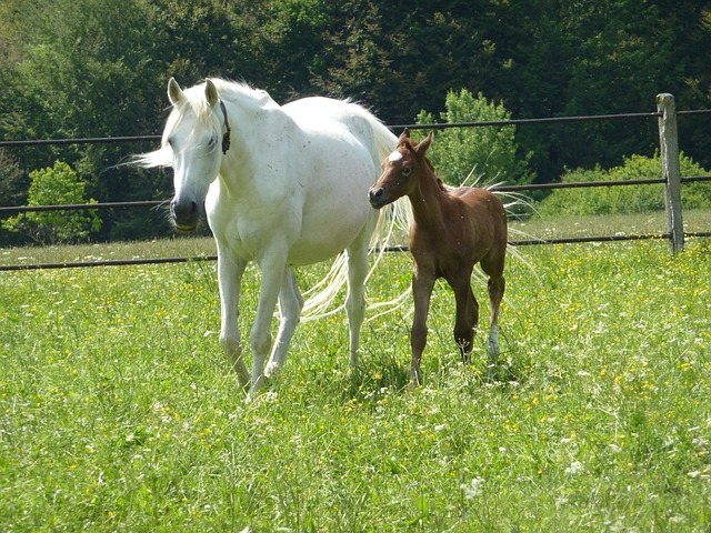 Free horse mare colt meadow pasture field trees grass