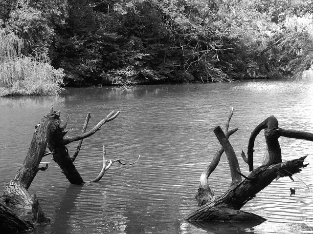 Free black and white black and white photo wood water