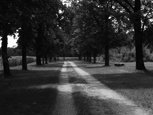 Free black and white black and white photo wood avenue